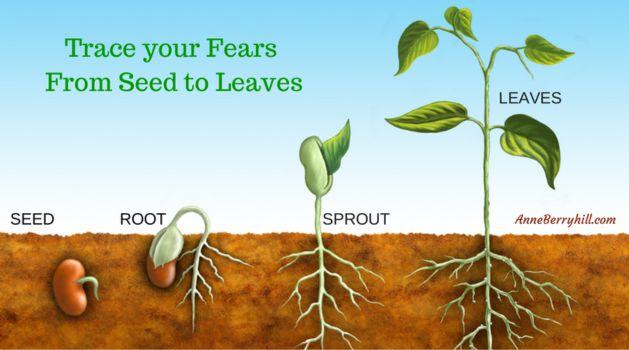 seedtoleaves.jpg